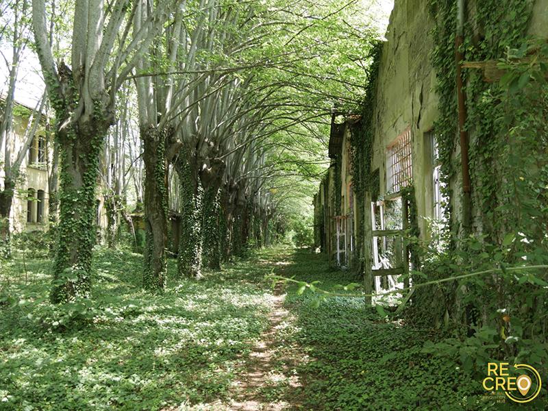 Il Dinamitificio Nobel di Carmignano, invaso dalla vegetazione